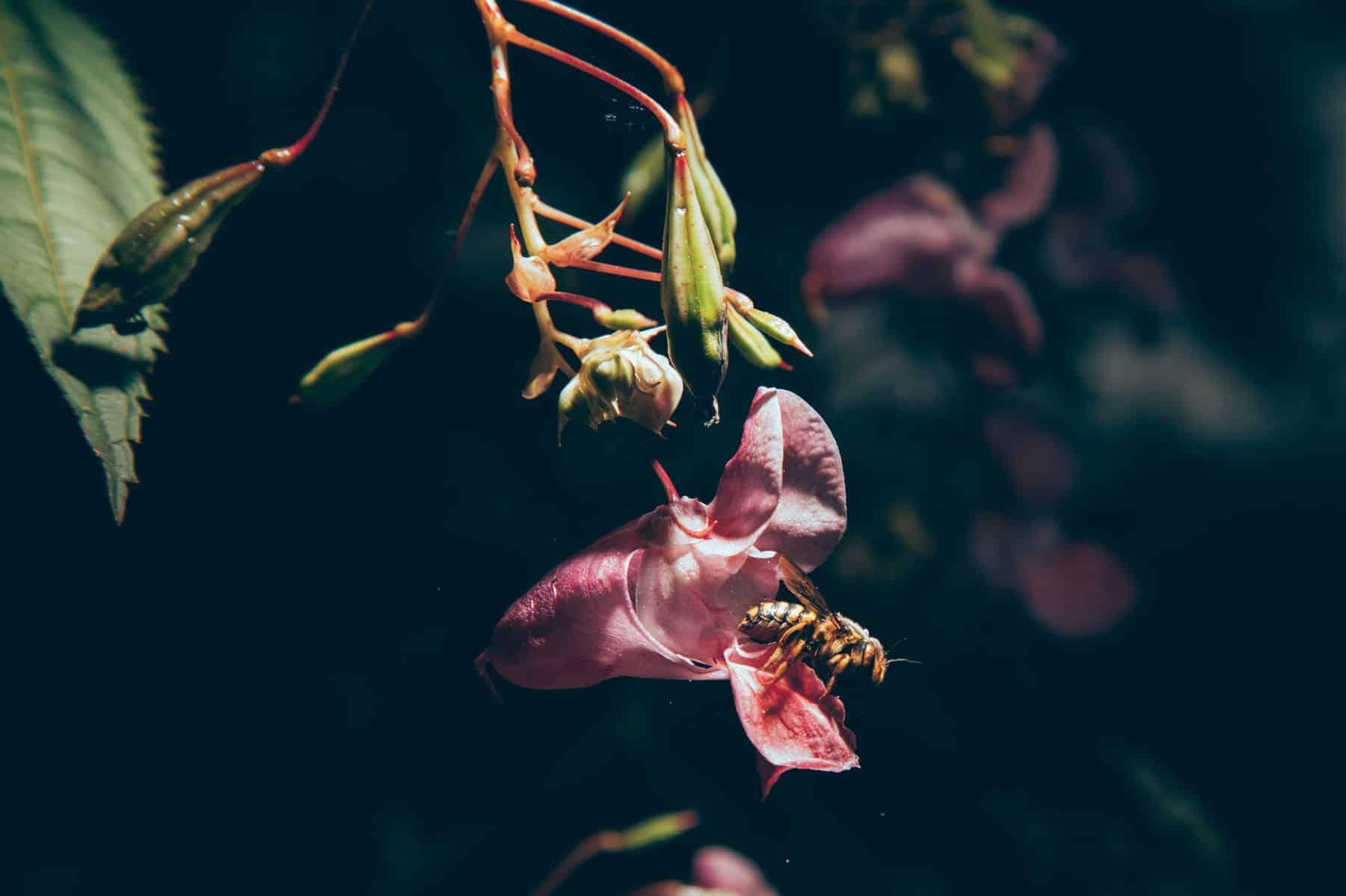 https://proart.photo - ProArt Photography